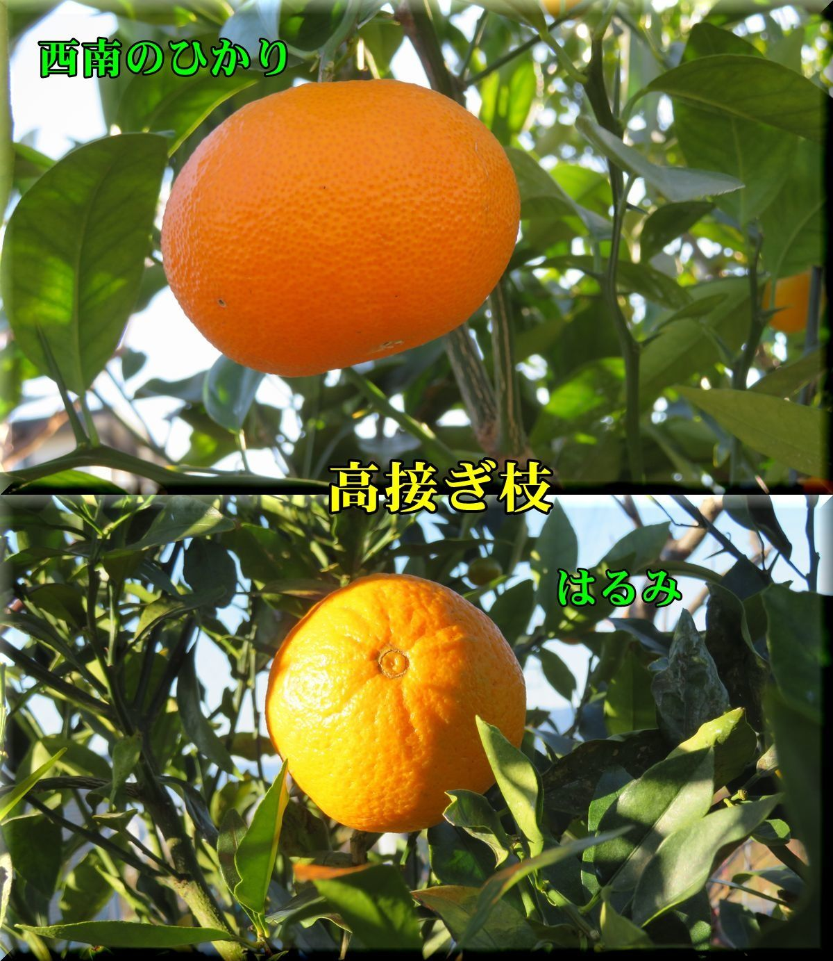 1seinan_harumi171210_004.jpg