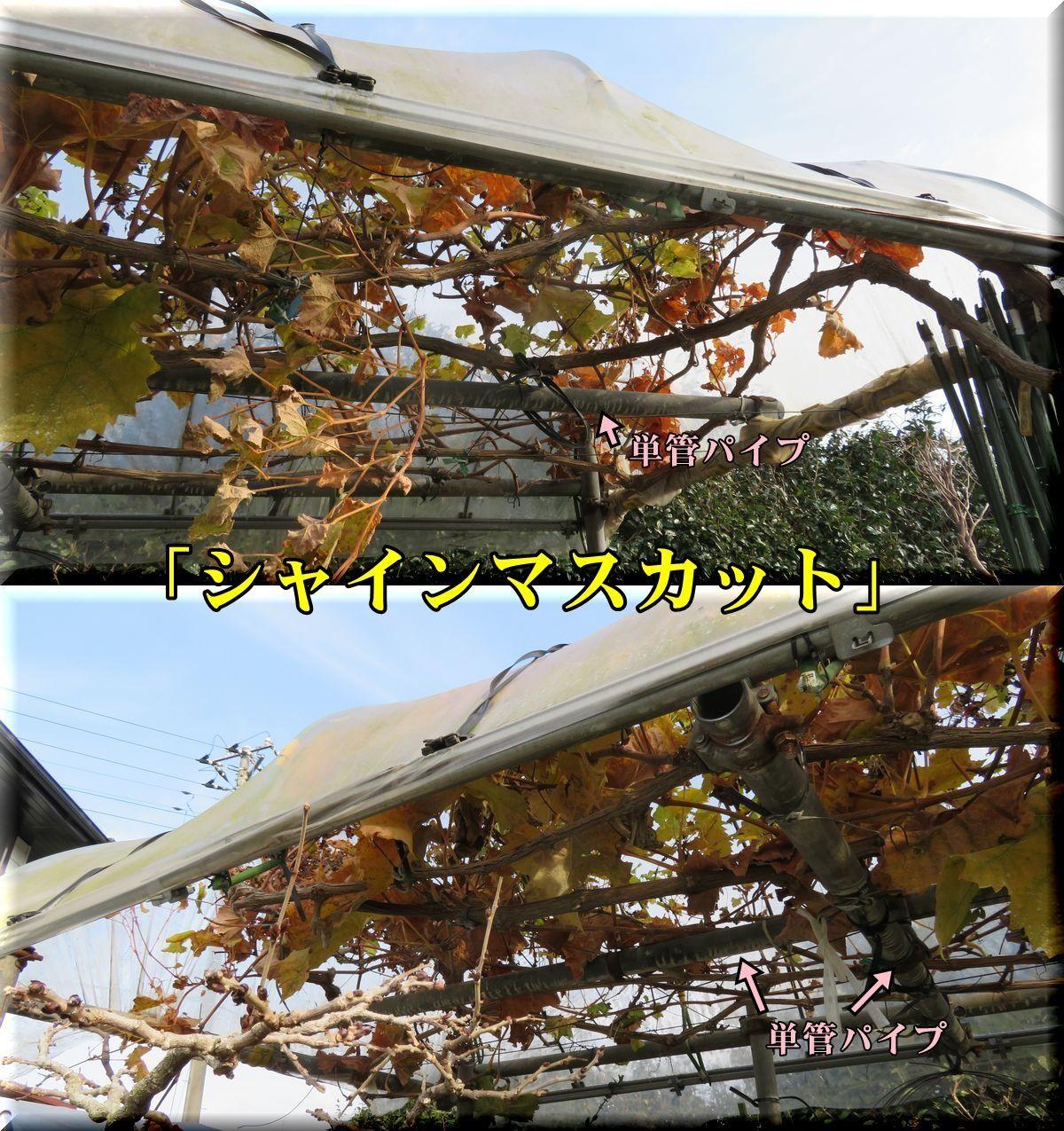1syainM171224_002.jpg