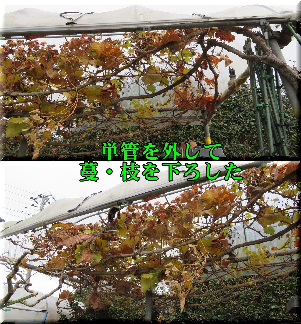 1syainM171224_004.jpg