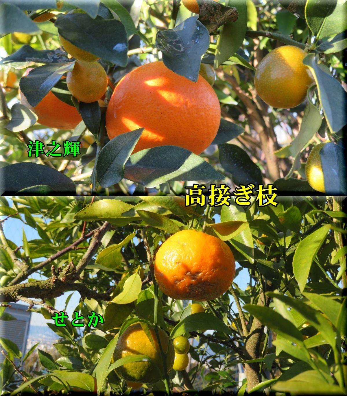 1tunok_setokai171210_002.jpg