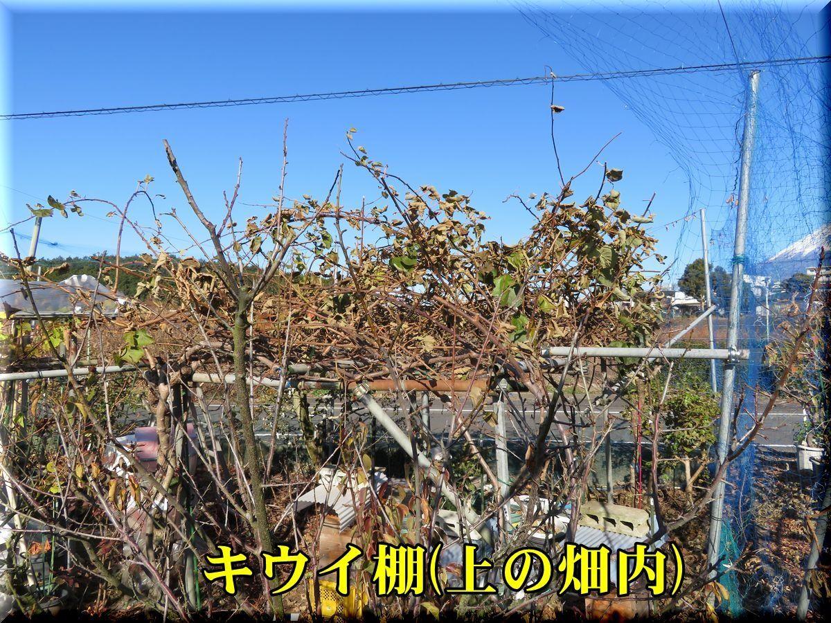 1ue_kiui171214_001.jpg