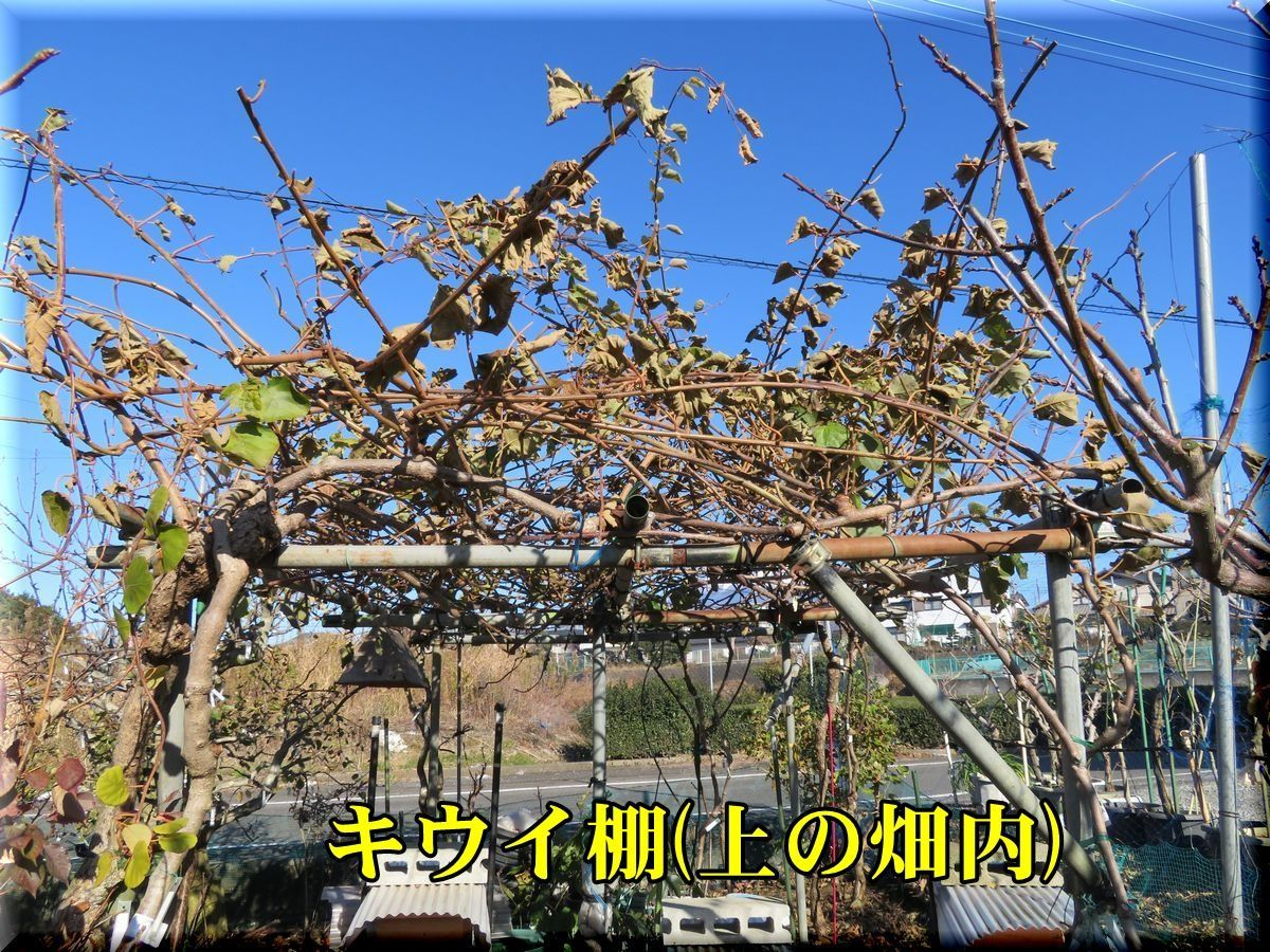 1ue_kiui171214_002.jpg