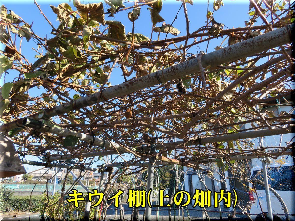 1ue_kiui171214_004.jpg