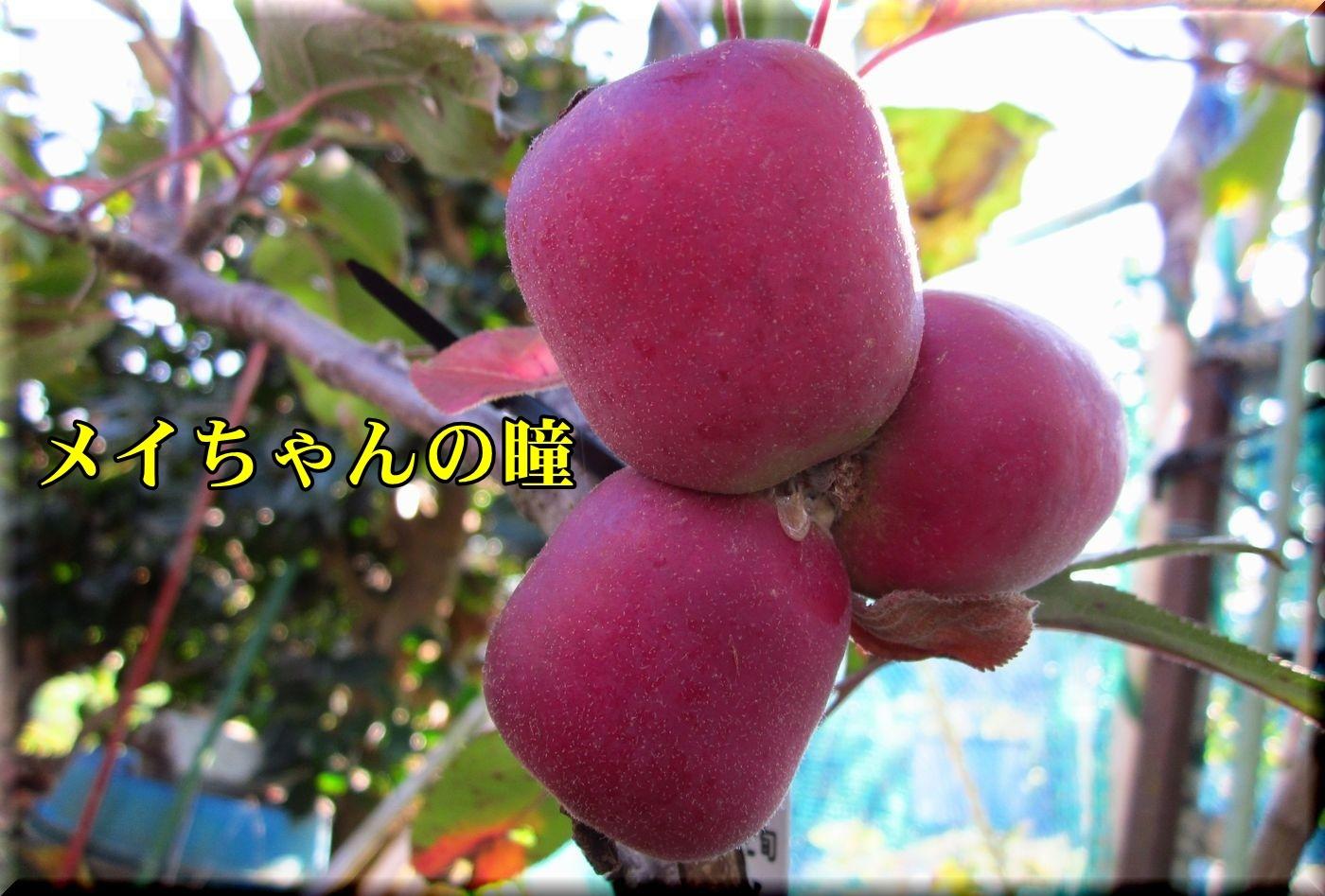 2meichan171109_017.jpg