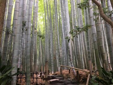 竹の寺報国寺