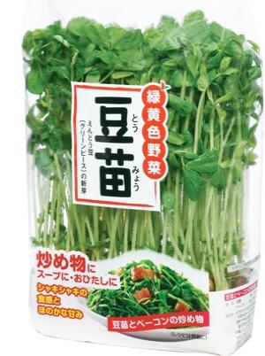 豆苗栽培してますか?