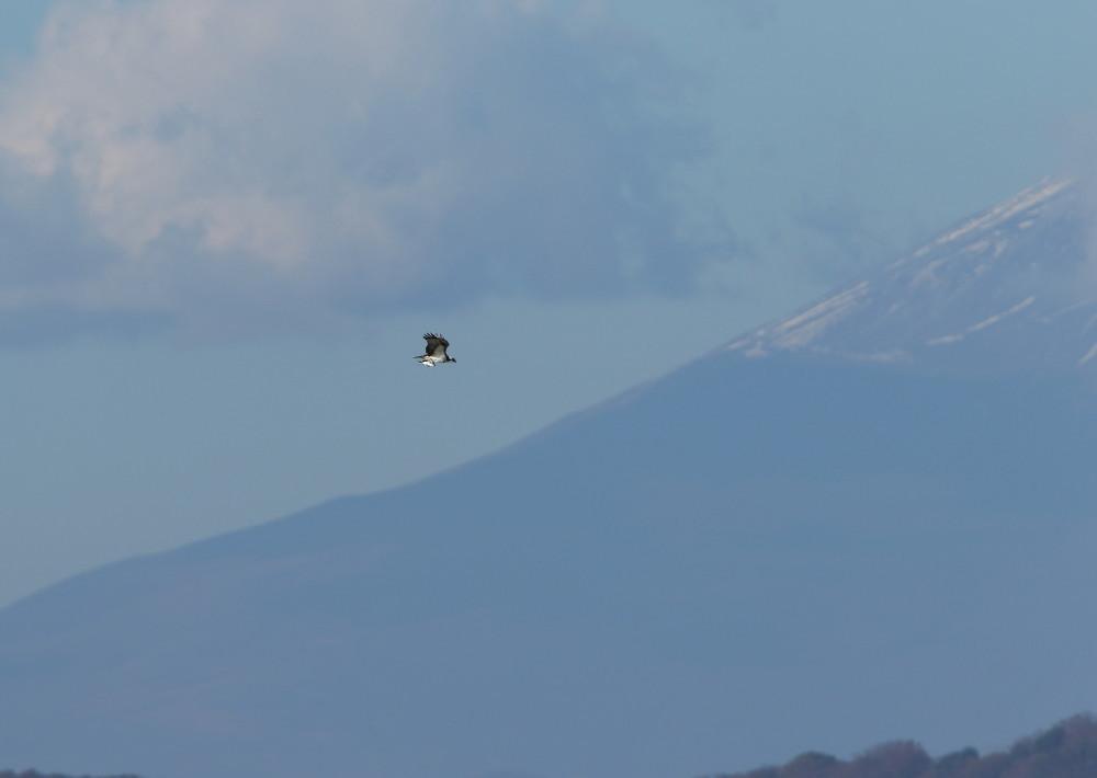 2D7A9148持ち帰り便富士山