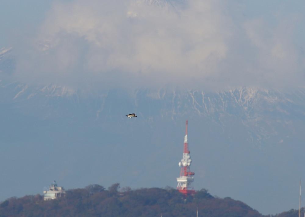 2D7A9151持ち帰り便富士山