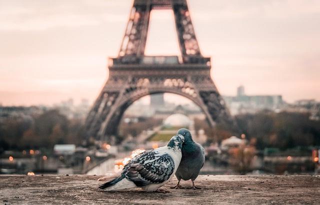 bird-2590901_640.jpg