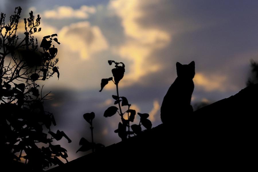 cat-1287438_1280.jpg