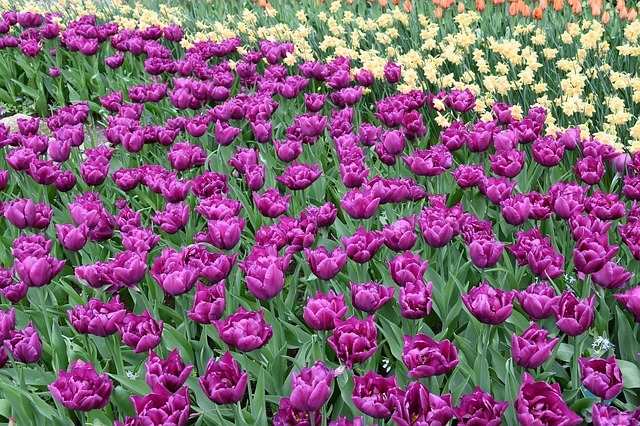 flowers-2273741_640.jpg