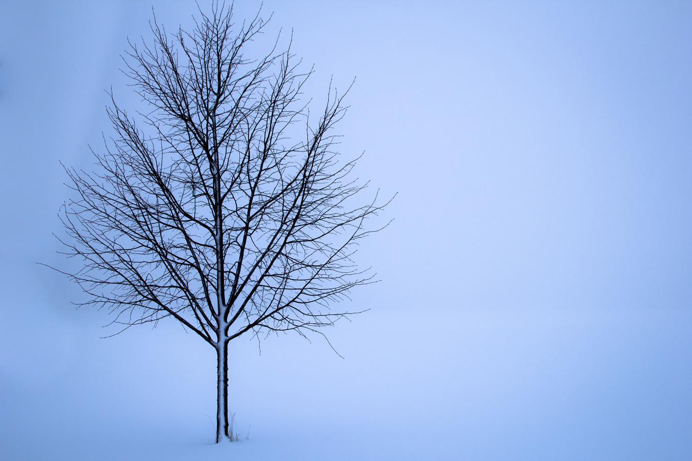 tree-1056598_1920.jpg