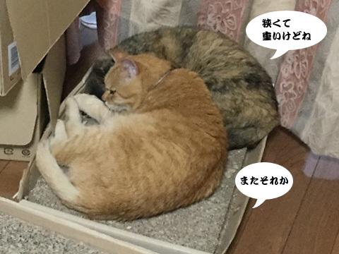 2017_10_04_4.jpg
