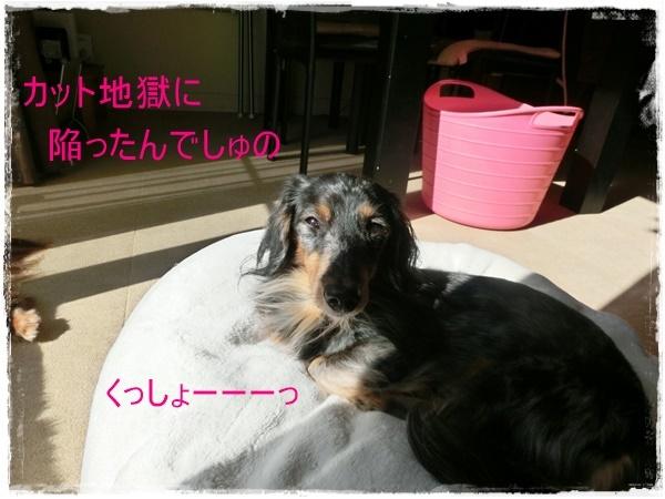 aki8.jpg