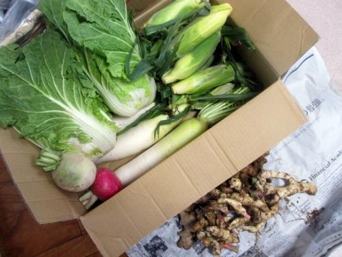 早稲沢野菜